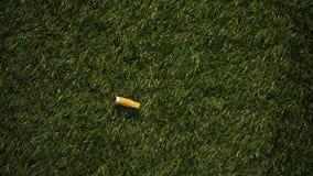 Cigarette stub thrown on green grass, irresponsible smoker causing danger, fire. Stock footage stock video