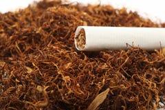 Cigarette on tobacco Stock Photos