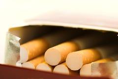 Cigarettes in box. Tobacco macro stock photography