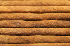 Background from cigars Royalty Free Stock Photo
