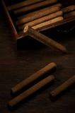 Cigarillo in casella Immagini Stock