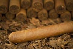 Cigarr på tobak Royaltyfria Bilder