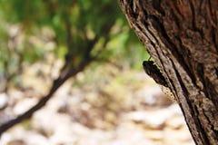 Cigarra em um tronco de árvore imagens de stock royalty free