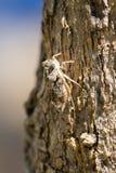 Cigarra en el árbol Imagen de archivo libre de regalías