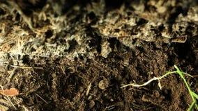 Cigarra que emerge de la tierra metrajes