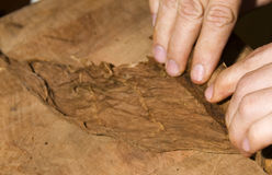 cigarren låter vara nicaragua rullande tobak royaltyfri bild