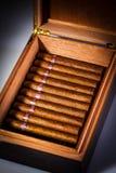 Cigarrer i humidor Arkivbild