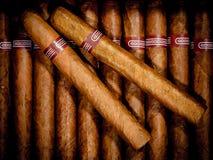 Cigarrer i humidor Arkivfoto