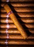 Cigarrer i humidor Royaltyfri Bild