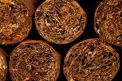 Cigarrer i humidor Arkivbilder