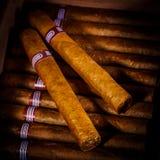 Cigarrer i humidor Fotografering för Bildbyråer