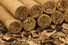 Cigarrer på tobak Arkivfoto