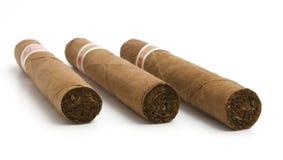 cigarrlyx Royaltyfri Bild