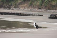Cigarro picado preto e branco na praia Foto de Stock Royalty Free