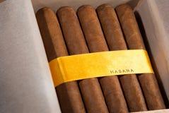 Cigarros cubanos en rectángulo Imagenes de archivo