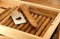 Cigarros en humidor Foto de archivo libre de regalías