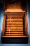 Cigarros en humidor Imágenes de archivo libres de regalías