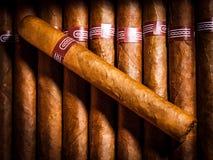 Cigarros en humidor Foto de archivo