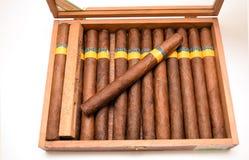 Cigarros en humidor Fotografía de archivo