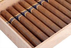 Cigarros en un humidor Imagen de archivo libre de regalías