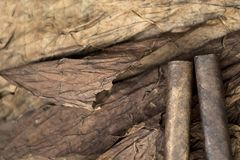 Cigarros rodados en un grupo Imagenes de archivo