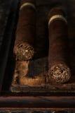 cigarrpar Royaltyfri Foto