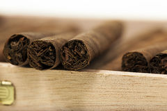 Cigars in a box Royalty Free Stock Photography