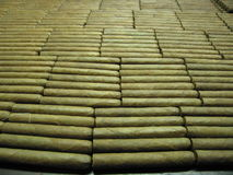 Cigars in Cuban Factory. Newly made Cohiba cigars in factory in Havanna Royalty Free Stock Photo