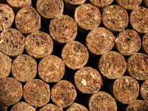 Cigars freshly rolled Royalty Free Stock Image
