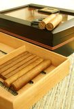 Cigars and humidor Royalty Free Stock Image