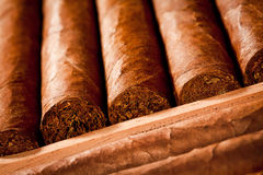 Cigars in humidor. Some cigars lay in humidor Stock Photo