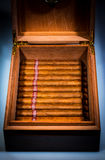 Cigars in humidor Royalty Free Stock Images
