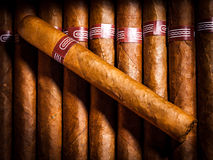 Cigars in humidor Stock Photo