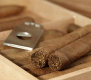 Cigars in open humidor Royalty Free Stock Image