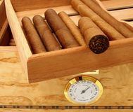Cigars in open humidor box Stock Photography