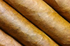Cigars in a row close-up Royalty Free Stock Photography