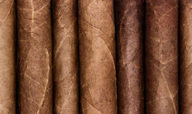 Cigars in a row. Close-up background Stock Image