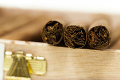 Cigars Stock Photo