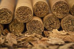 Cigars on Tobacco. A macro shot of cigars on tobacco. These cigars are robusto sized stock photos