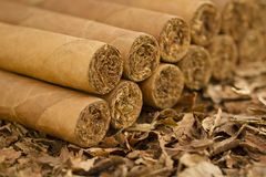 Cigars on Tobacco Stock Photos