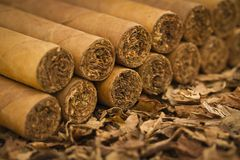 Cigars on Tobacco. A macro shot of cigars on tobacco. These cigars are robusto sized Royalty Free Stock Photography