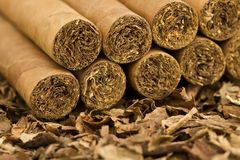 Cigars on Tobacco. A macro shot of cigars on tobacco. These cigars are robusto sized stock photo