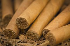 Cigars on Tobacco. A macro shot of cigars on tobacco. These cigars are robusto sized royalty free stock images