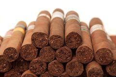 Cigars in white background Stock Image