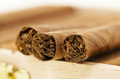 Cigars Royalty Free Stock Images
