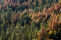 Ścigi i suszy deat w górach Zdjęcia Royalty Free