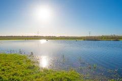 Cigni che nuotano lungo il bordo di un lago al sole alla caduta Fotografia Stock Libera da Diritti