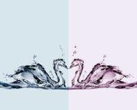 Cigni colorati dell'acqua nell'amore immagine stock