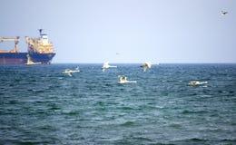 Cigni di volo e nave da carico Fotografia Stock Libera da Diritti