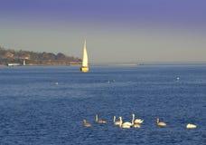Cigni e barca a vela nel mare Fotografie Stock